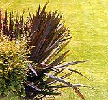 Phormium grass
